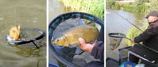 Tench are the main weight builders in matches. If you can keep them coming, then you'll be in for a 'red-letter' day!